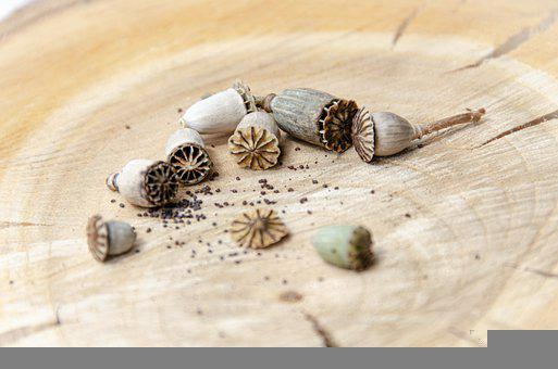 Poppy, Seeds, Capsule, Poppy Seeds, Seed
