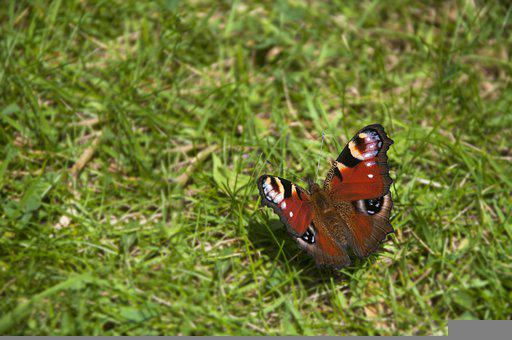 Butterfly, Resting, Rest, Nature