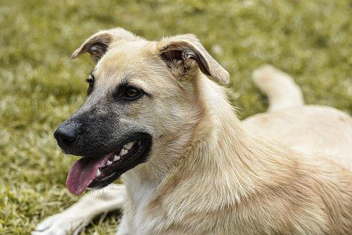 Dog, Hybrid, Good, View, Pet, Animal, Snout, Head, Cute