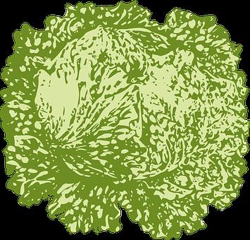 Lettuce, Leafy, Vegetable, Salad, Green, Burgers