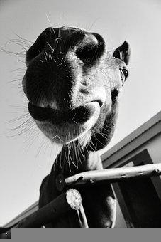 Horse, Close-Up, Portrait, Look