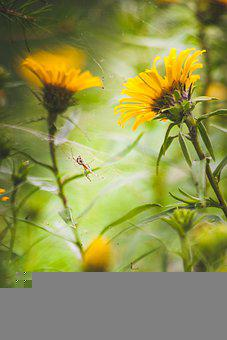 Flowers Of The World, Spider, Nature