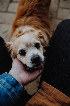 Dog, Cute, Love, Looking, Domestic, Mammal, Portrait