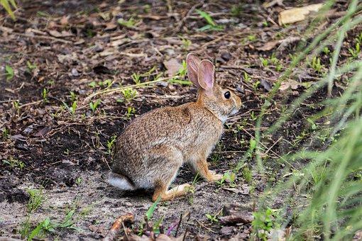 Rabbit, Mammal, Hare, Bunny, Animal, Nature, Cute, Fur