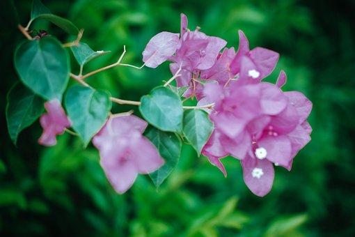 Flowers, Petals, Spring, Nature, Bloom