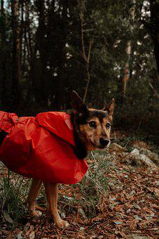 Dog, Animal, Forest, Puppy, Pet, Cute