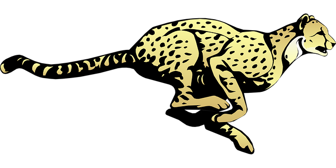 Cheetah, Running, Speed, Animal, Fast