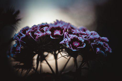 Flowers, Summer, Clove, Nature, Bloom