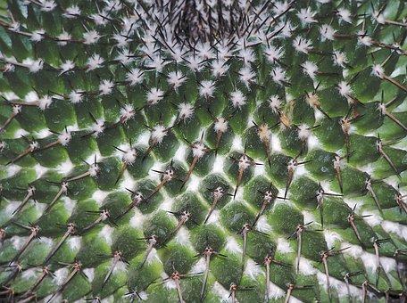 Cactus, Structure, Sample, Pungent