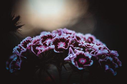 Flowers, Clove, Field, Pink, Floristry, Bouquet, Love
