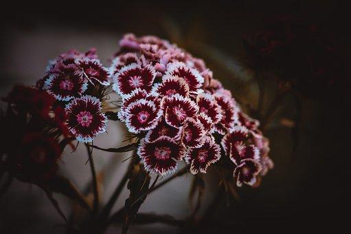 Clove, Flowers, Pink, Floristry, Petals, Love, Bouquet