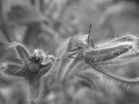 Insect, Bug, Nature, Entomology, Black And White, Larva