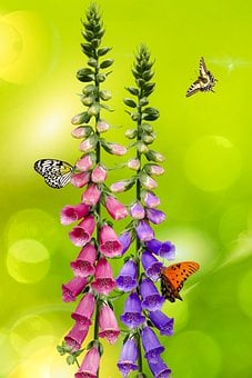 Background, Flower, Garden, Butterfly, Flowers