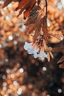 Flower, Natural, Nature, Flowers, Summer, Spring, Plant