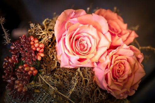 White, Pink, Rose, Bud, Flower, Garden, Blossom, Bloom