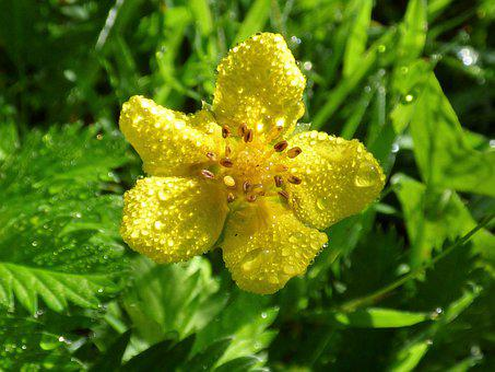 Flower, Summer, Nature, Garden, Floral, Plant, Bloom