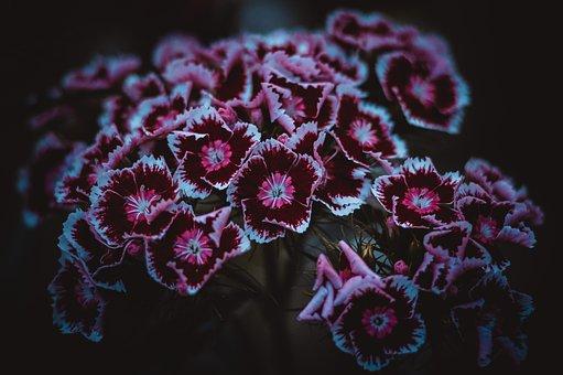 Flowers, Summer, Clove, Nature, Flower