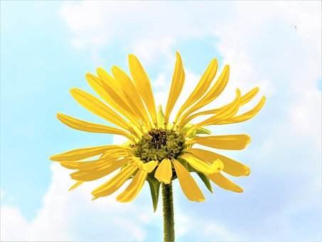 Sunflower, Sky, Summer, Yellow, Nature, Bloom, Blossom