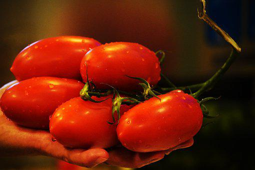 Tomatoes, Red, Fruit, Food, Romanian, Bio, Nutrition