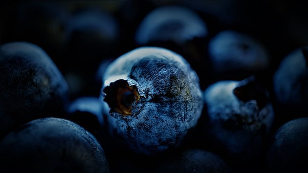 Blueberry, Black Berry, Moll Berry, Sing
