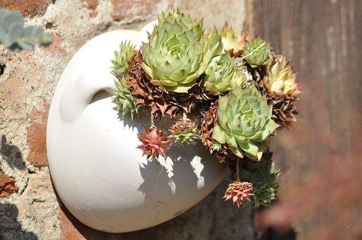 Succulent Plant, Succulent, Botany, Succulents, Plants