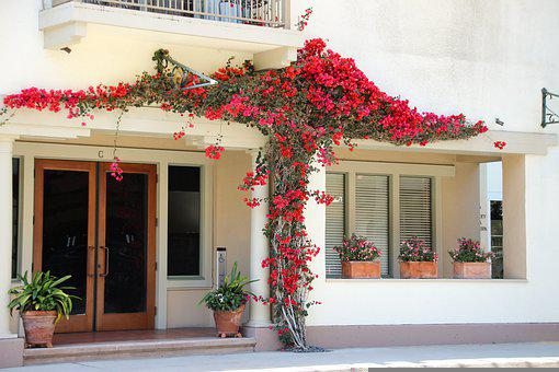Bougainvillea, Flower, Red, Nature, Plant, Bougainville