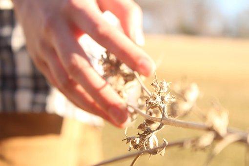 Hand, Plant, Flannel, Brown, Autumn