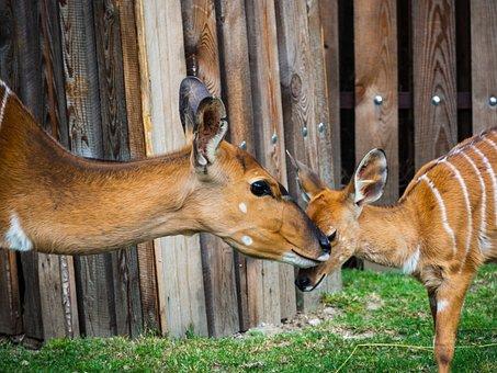 Mother, Cub, Animal, Head, Zoo, Fauna, Nature, Mammal