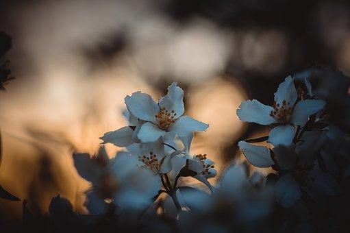 Jasmine, Flower, Bush, Garden, Flowers, Spring, Roses