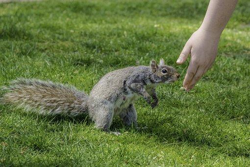 Squirrel, Hand, Friendly, Cure, Mohan, Nannapaneni