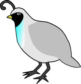 Quail, Birds, Animals, Poultry, Fowl