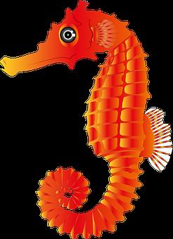 Seahorse, Sea, Fish, Animal, Marine