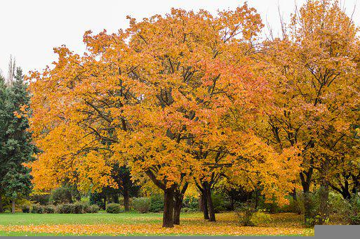 Margaret Island In The Fall, Nature Photo, Budapest
