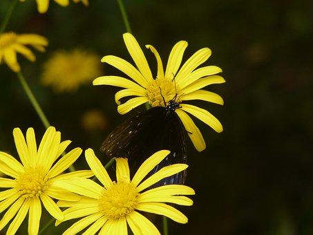 Flowers, Yellow, Macro, Close Up, Detail, Black Yellow