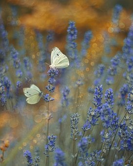 Butterfly, Flower, Insects, Nature