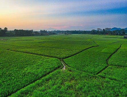 Field, Landscape, Green, Sky, Grass