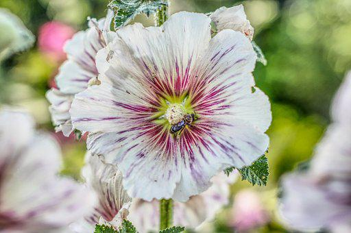 Flower, Bee, Wild Bee, Blossom, Bloom, Summer, Hdr