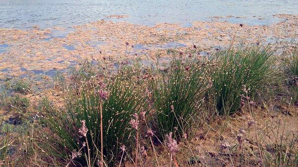 Nature, Lake, Grass, Green, Field, View
