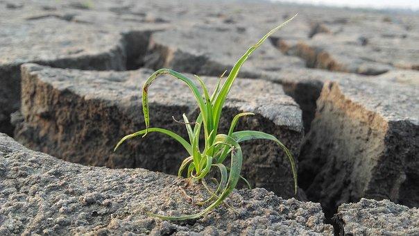 Nature, Grass, Landscape, Field, Plant