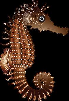 Seahorse, Brown, Nature, Animal