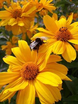 Flowers, Summer, Nature, Sunflower, The Sun, Plants