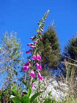 Flower, Digital, Pink, Plants, Nature, Colorful, Botany