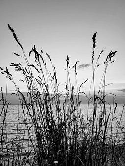 Nature, Water, Sea, Beach, Summer