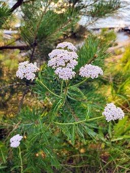 Flowers, Nature, Summer, Bloom