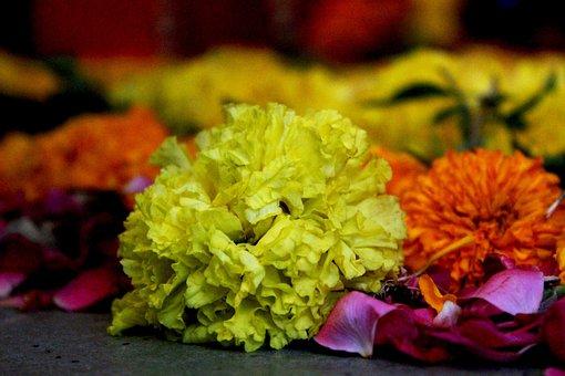 Yellow Flower, Sunflower, Flowers