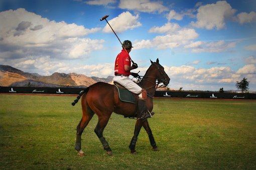 Polo, Horses, Jalisco, Equine, Mexico, Sky, Mountain
