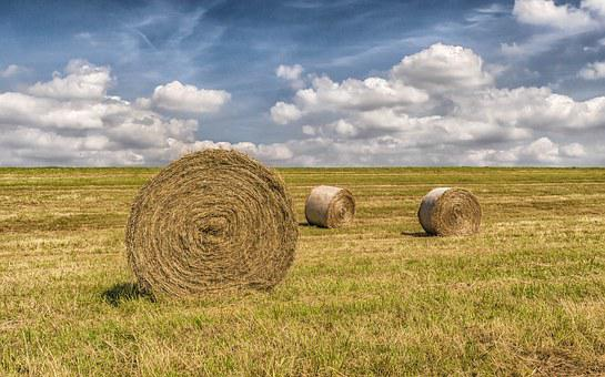 Summer, Harvest, Straw, Field, Stubble, Straw Bales