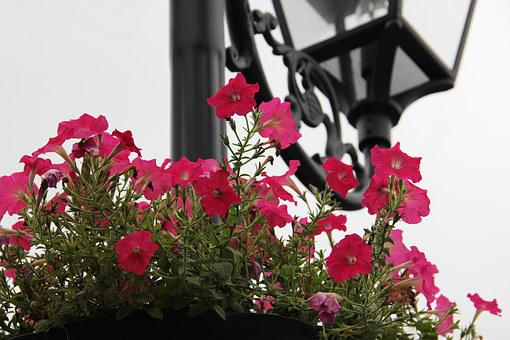 Flower, European Lamps, European Architecture, Flowers