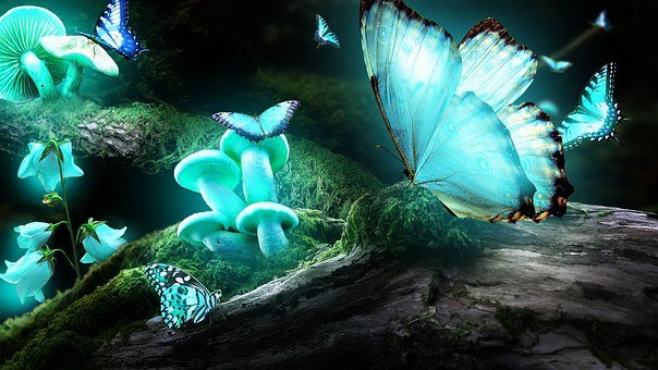 Forest, Wild Mushrooms, Motilal, Light, Blue, Night