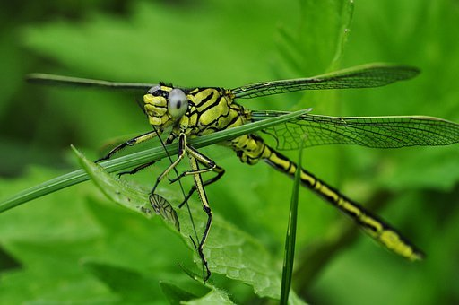 Dragonfly, Macro, Insect, Water, Lake, Predatory Insect